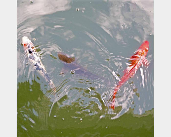 韓湘寧-魚池自畫像–3