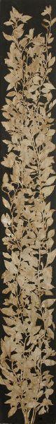 蔡獻友-原植物-7