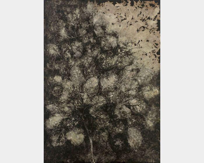 蔡獻友-植物史-11