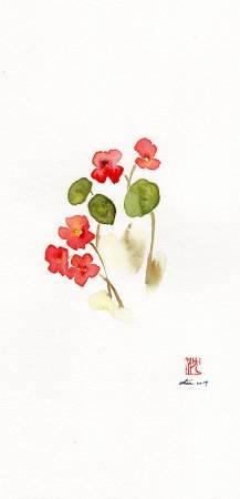 沈鈺華-旱金蓮II