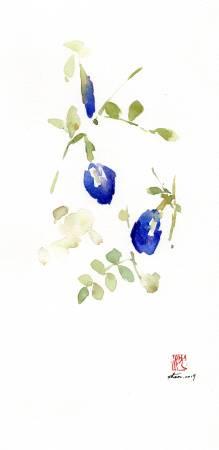 沈鈺華-蝶豆II