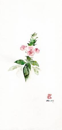 沈鈺華-爵床 II