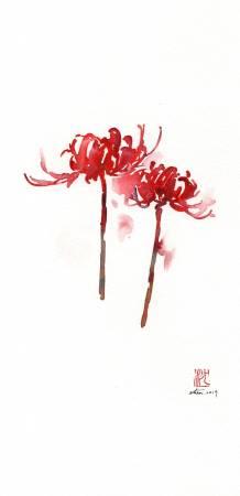 沈鈺華-紅花石蒜I