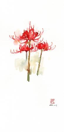 沈鈺華-紅花石蒜III
