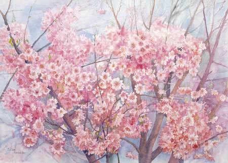 葛拉娜-阿里山的初春 Beautiful spring in Alishan