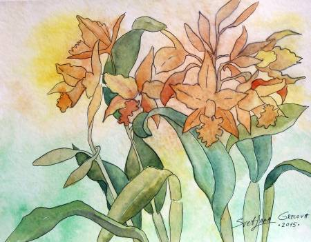 葛拉娜-Orange orchids
