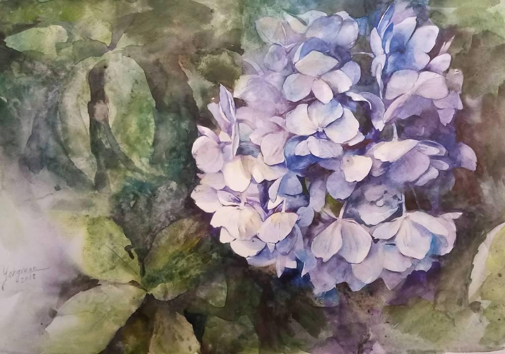 Yongxuan-繡球花