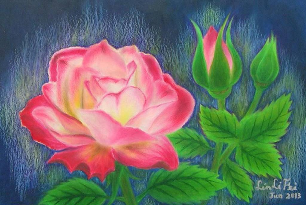 林俐斐-綻放光芒的玫瑰